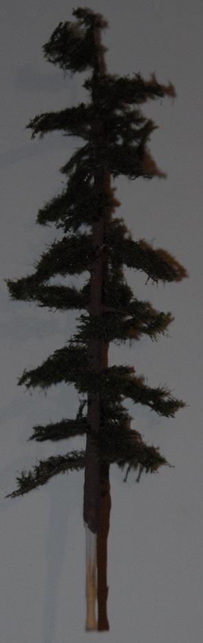 Detalj av et tre.